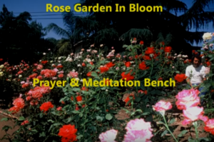 Hidden Valley Rose Garden Visit
