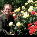 TJ David Touring Southport Roses in the Summer