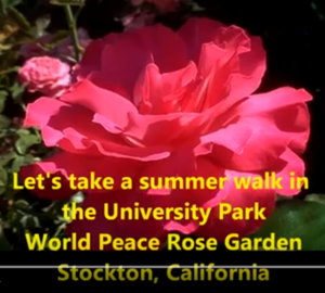 University Park World Peace Rose Garden