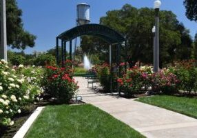 University park worlpd peace rose garden arch
