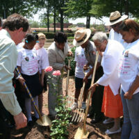 men and women are planting a rose bush