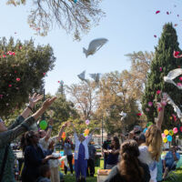 People are releasing the dove in the air and throwing rose petals